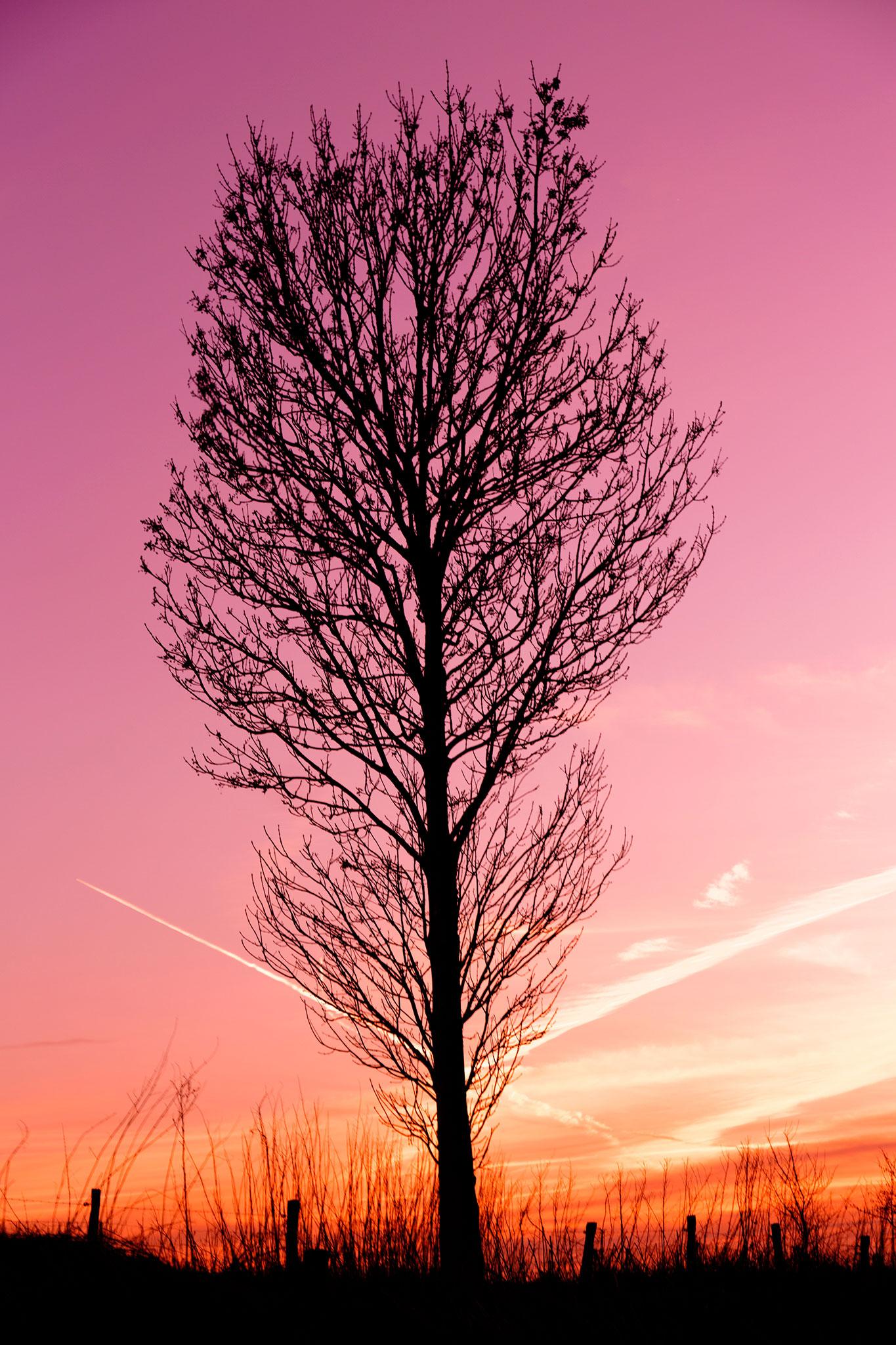 Arbre et coucher de soleil par Stéphane Thirion