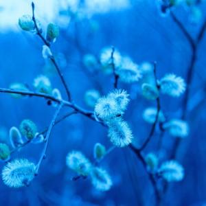 Bourgeons ouvert et tons bleu par Stéphane Thirion