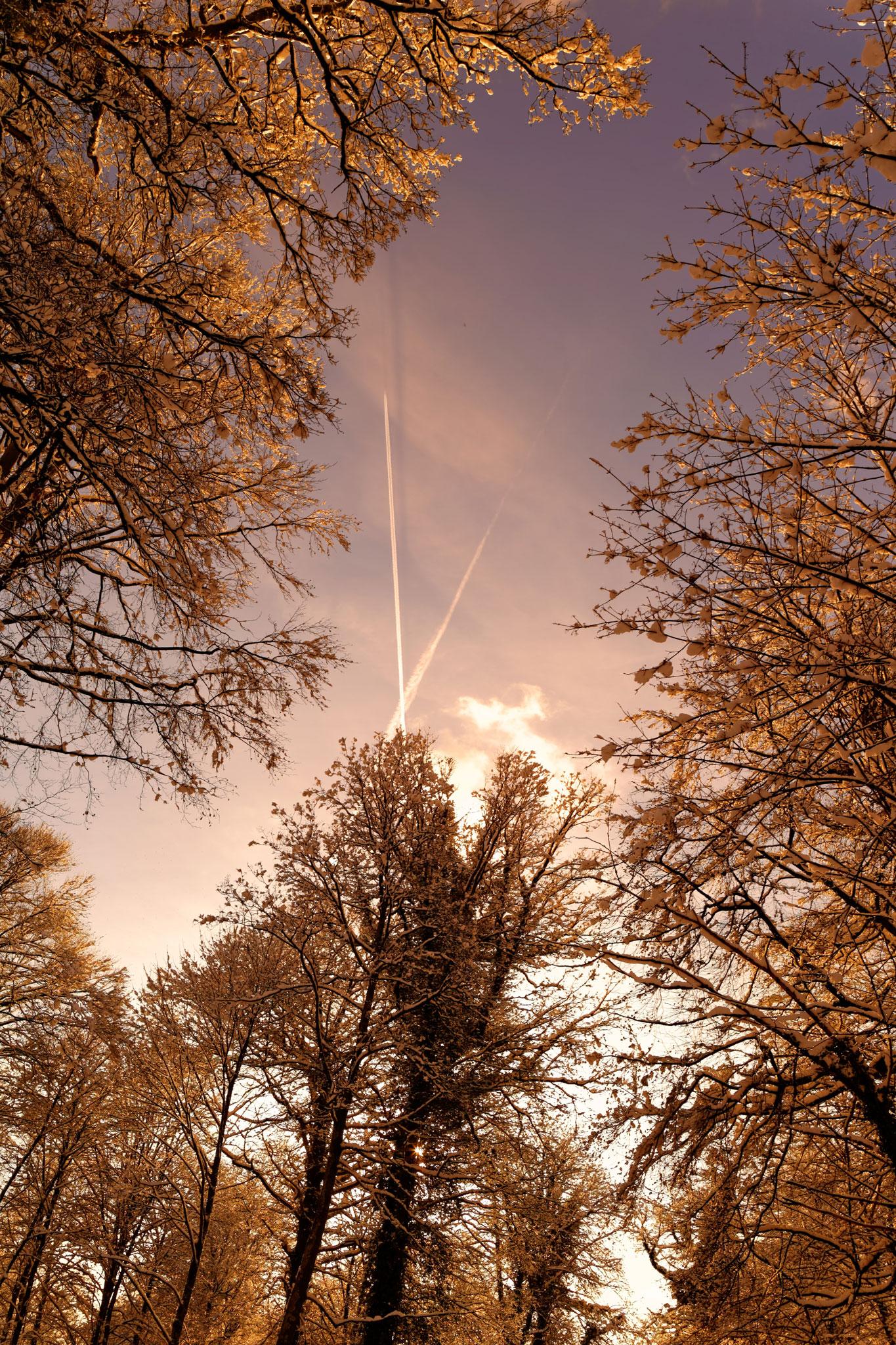 Voyage dans la foret glacé par Stéphane Thirion etix photos