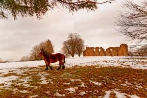 Cheval et ruine de château enneigé Montquintin