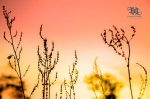 Flore et coucher de soleil en province de Luxembourg