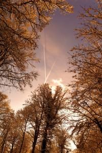 Voyage dans la foret glacé par Stéphane Thirion